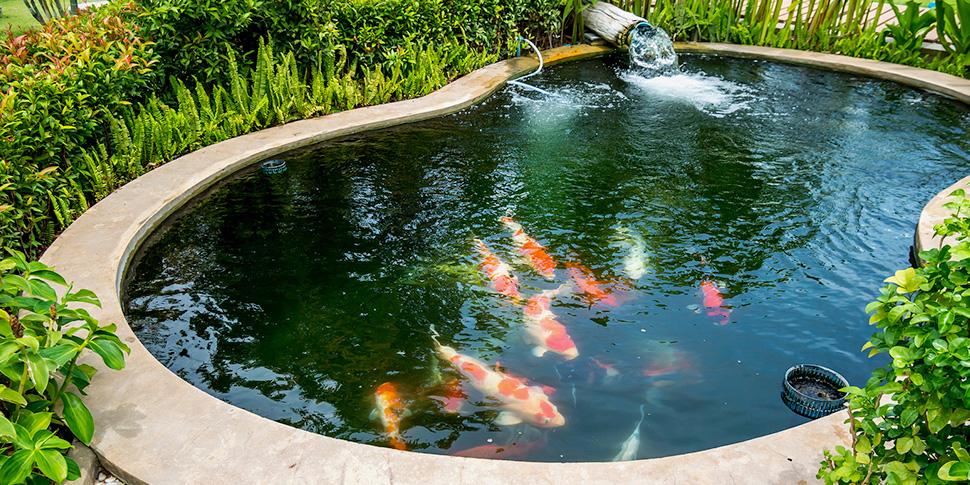 membuat kolam ikan koi dari batu bata